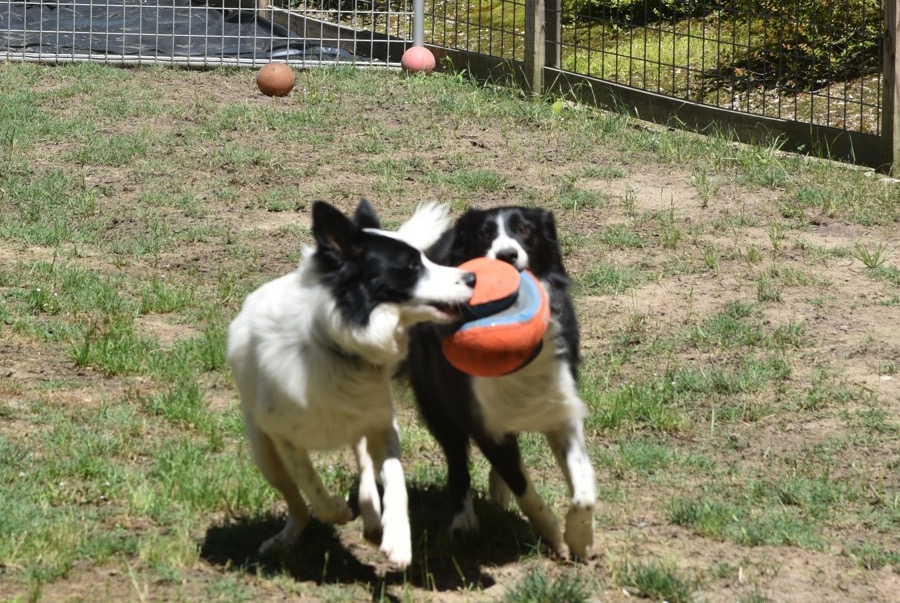 Harper and Maggie with orange ball