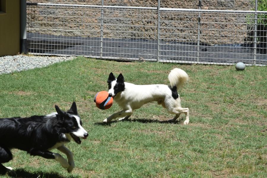 Harper with orange ball