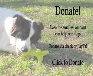 Jade donate