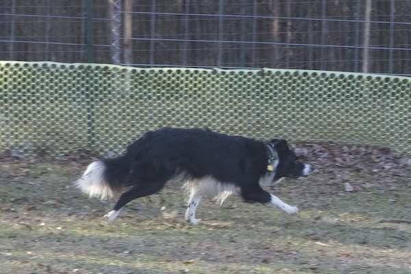 Rex photo 5
