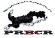 Phoenix Rising Border Collie Rescue logo