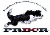 Phoenix Rising Border Collie Rescue logo