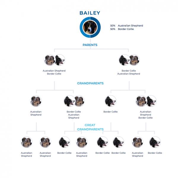 Bailey's family tree