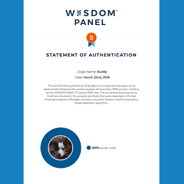 Buddy Wisdom Panel Certificate