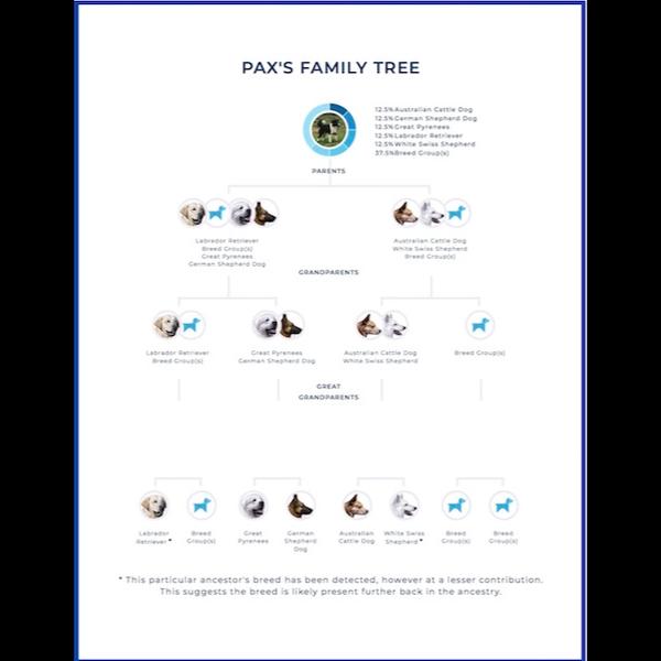 PAX Family Tree