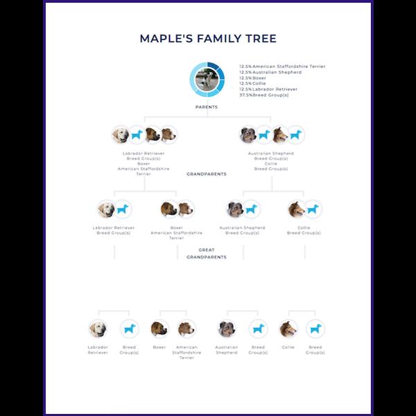 Maple Wisdom Panel Family Tree