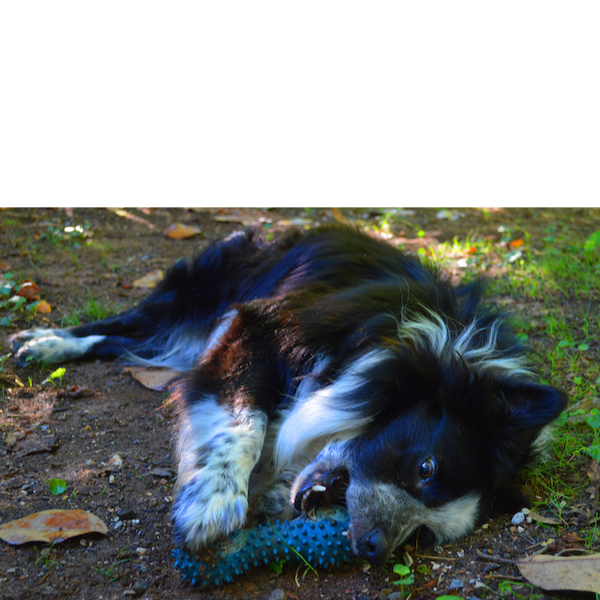 Sammy photo 3